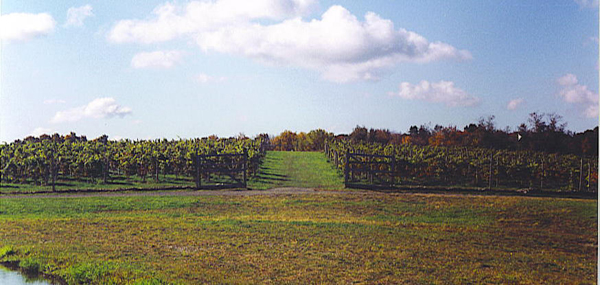 Oak Summit Vineyard
