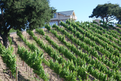 Baehner-Fournier Vineyards