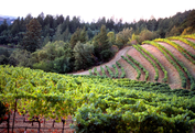Mount Veeder Winery & Vineyards