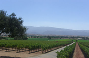 William James Cellars