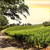 Brutocao Cellars & Vineyard